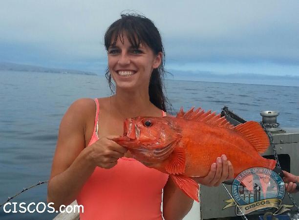 Channel islands sportfishing center ciscos fish count for Cisco s sportfishing fish count