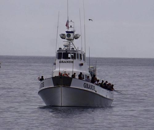 Grande sportfishing san diego ca for Point loma fishing report