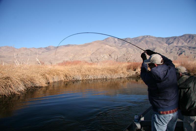 Owens River Fish Report Ca