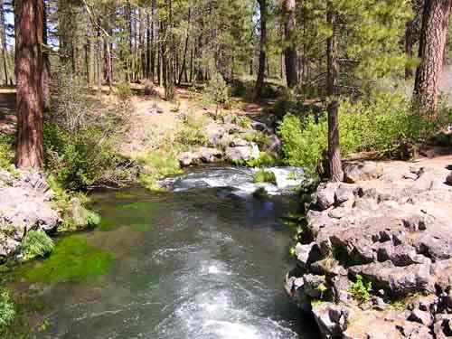 Hat creek fish report ca shasta county for Hat creek fishing