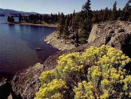Silverwood lake fish report cedarpines park ca san for Lake fishing near los angeles