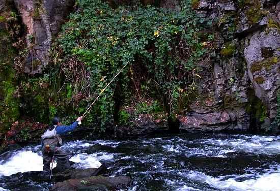 Sacramento river upper fish report siskiyou ca for Fishing store sacramento