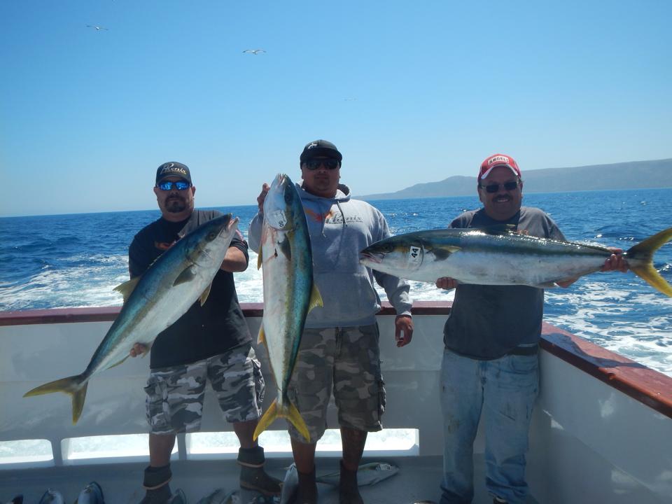 Freedom sportfishing san pedro ca for Fisherman s landing fish report