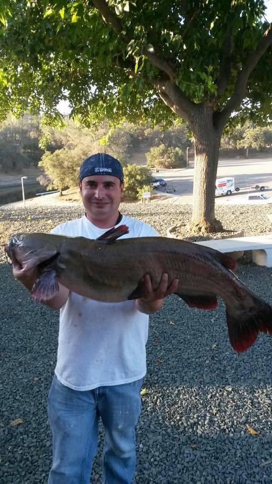 lake amador fish report ione ca amador county ForLake Amador Fishing Report