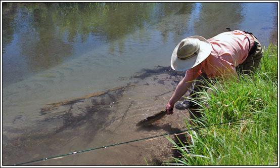 Lassen plumas fish reports for Hat creek fishing