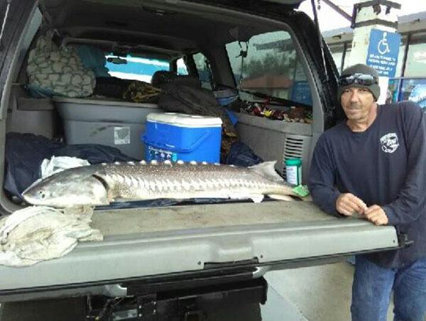 delta fish reports
