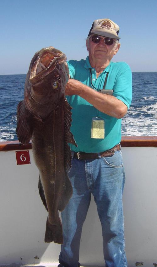 Long beach sportfishing native sun 3 4 for Long beach sport fishing