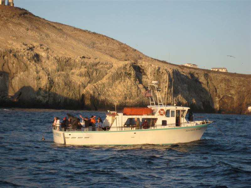 Hooks landing team en fuego roasting santa cruz island for Santa cruz fishing spots