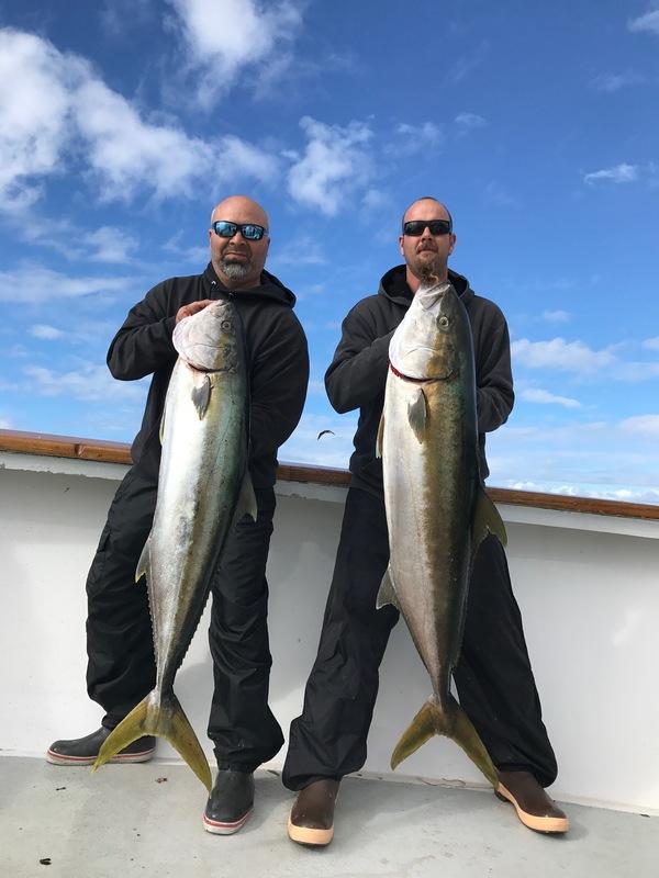 Yellowtail Fish Reports
