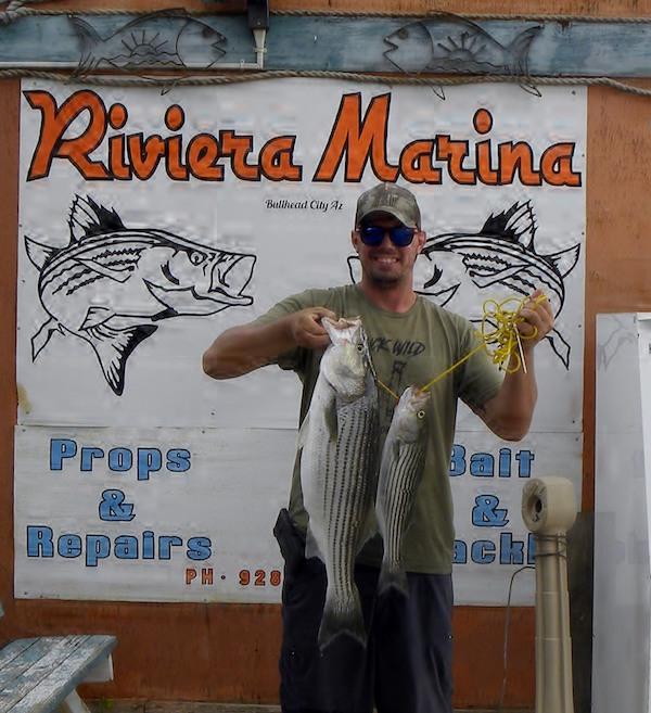 Colorado River - Davis Dam Fish Report - Davis Dam, NV