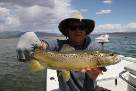 Crowley lake fish report mammoth lakes ca mono county for Fish at 30 lake
