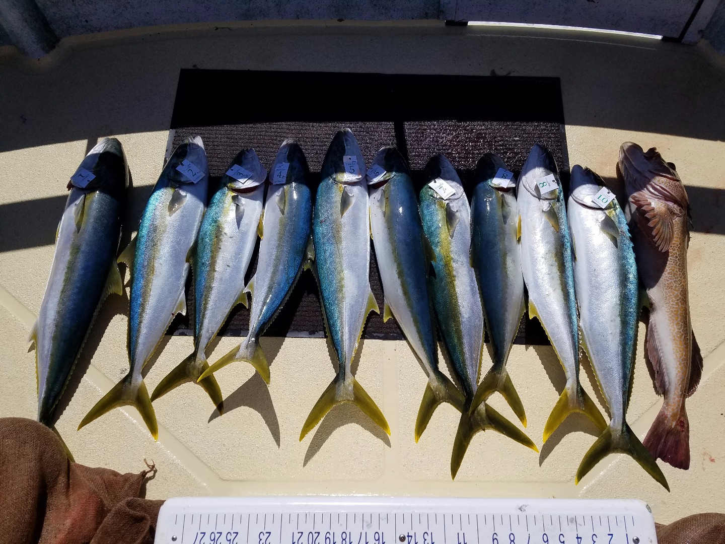 California yellowtail counts by boat april 30 2017 for Oxnard fish count