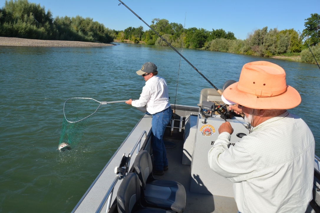 Sacramento river red bluff fish reports map for Fishing spots in sacramento