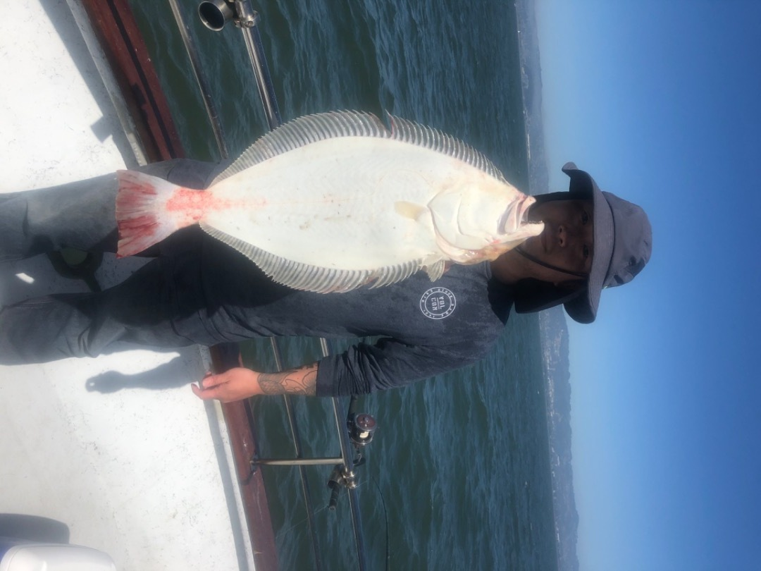 Live bait halibut and bass