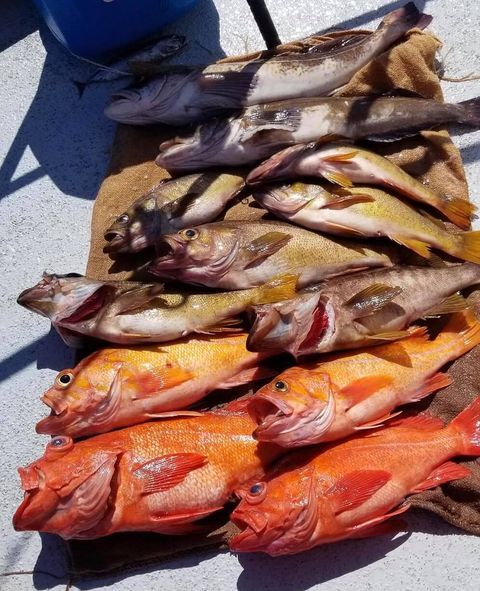 Limits of Lingcod & Rockfish Today
