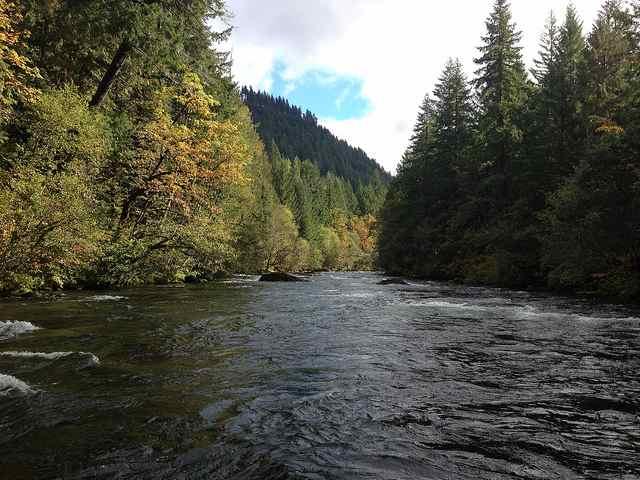 Mckenzie river fish report coburg or for Willamette river fishing report