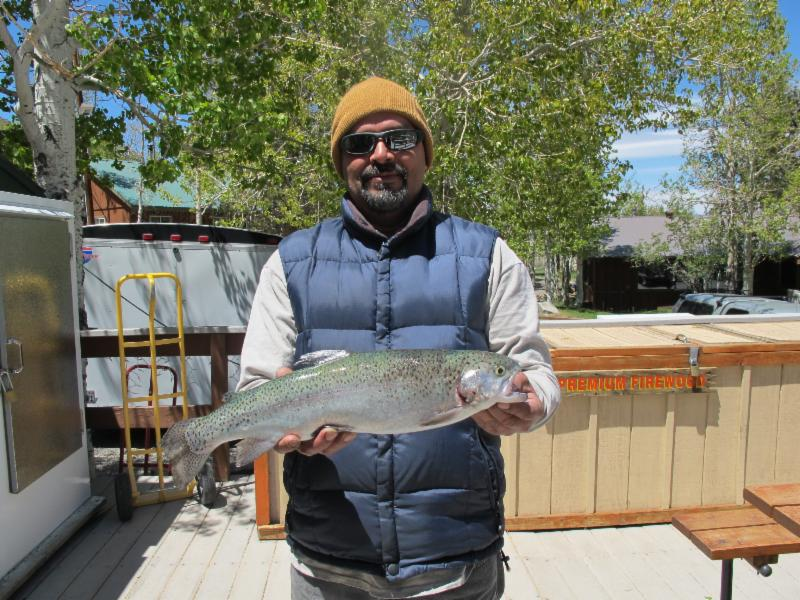 convict lake fish report mammoth lakes ca mono county