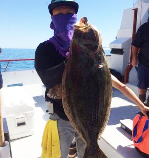 California halibut counts by boat april 18 2016 for Catalina island fishing report