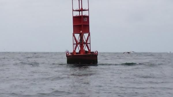 Buoy 10 Fish Report