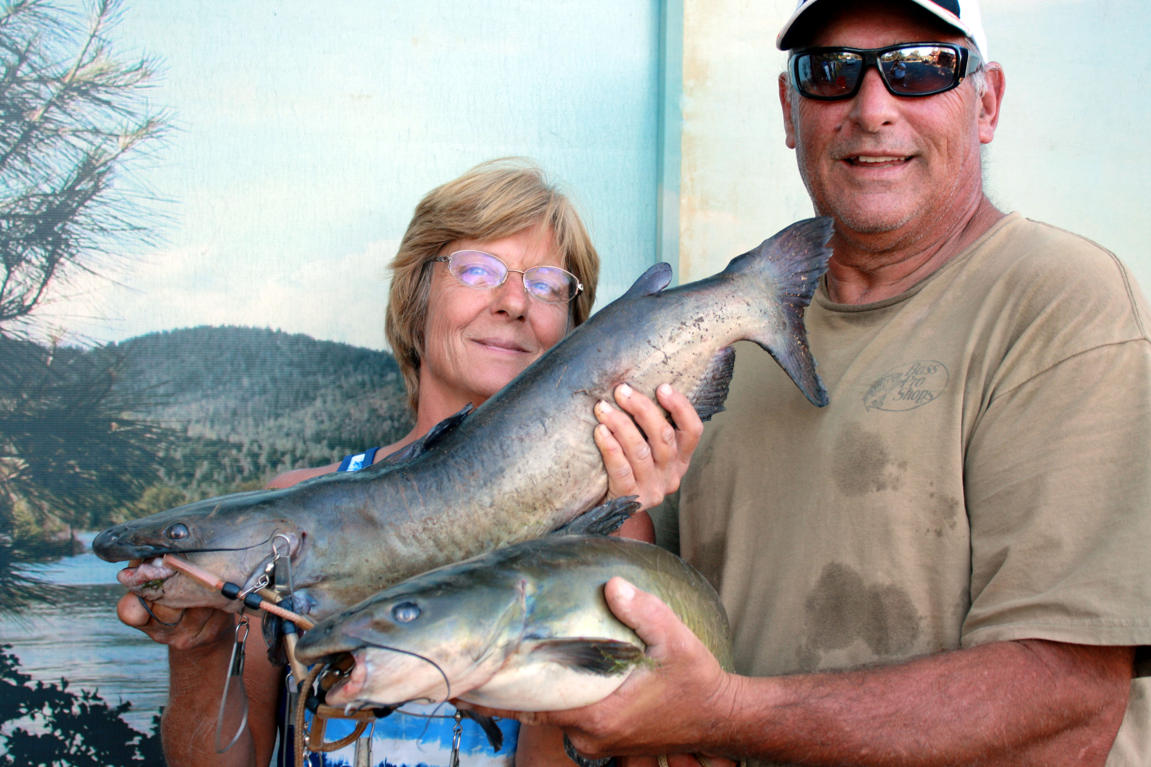 Collins lake fish report browns valley ca yuba county for Yuba river fishing report
