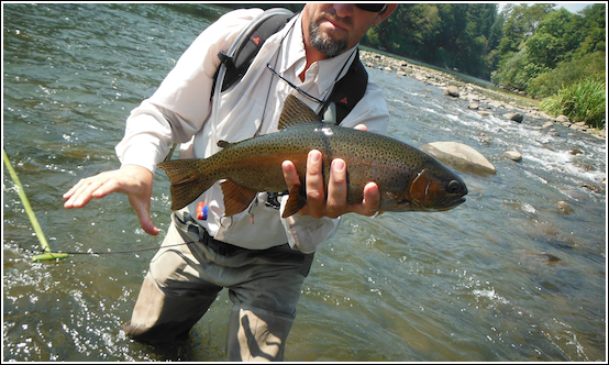 Pit river fish reports map for Trout fishing california
