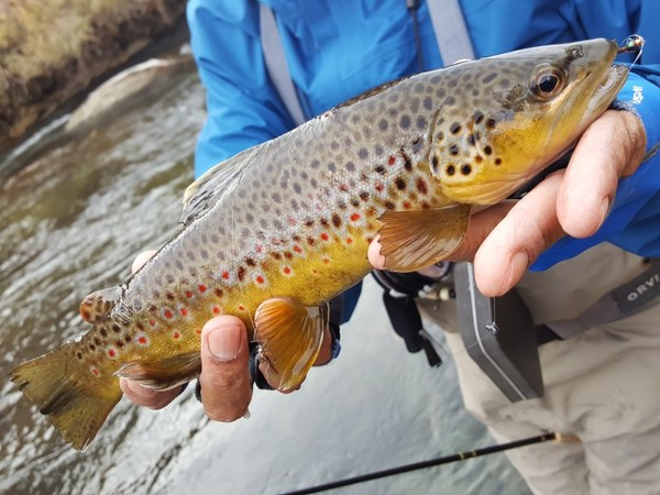 Owens river lower fish reports map for Sierra fish in english