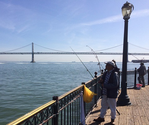 Pier 7 fish report san francsico ca san francisco county for Sf bay fishing report