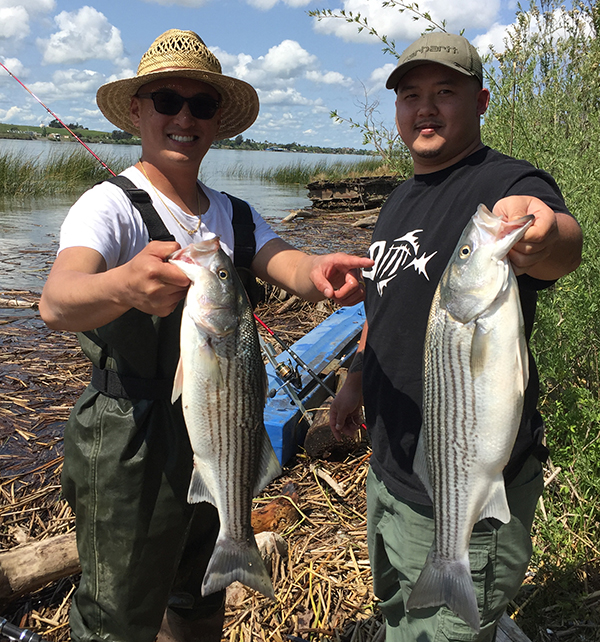 Sacramento River - Rio Vista Fish Report - Rio Vista, CA (Solano County)