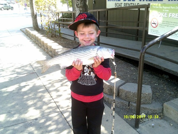 Del Valle Lake Fish Report - Livermore, CA (Alameda County)