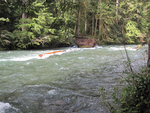 Mckenzie river fish report coburg or for Mckenzie river fishing