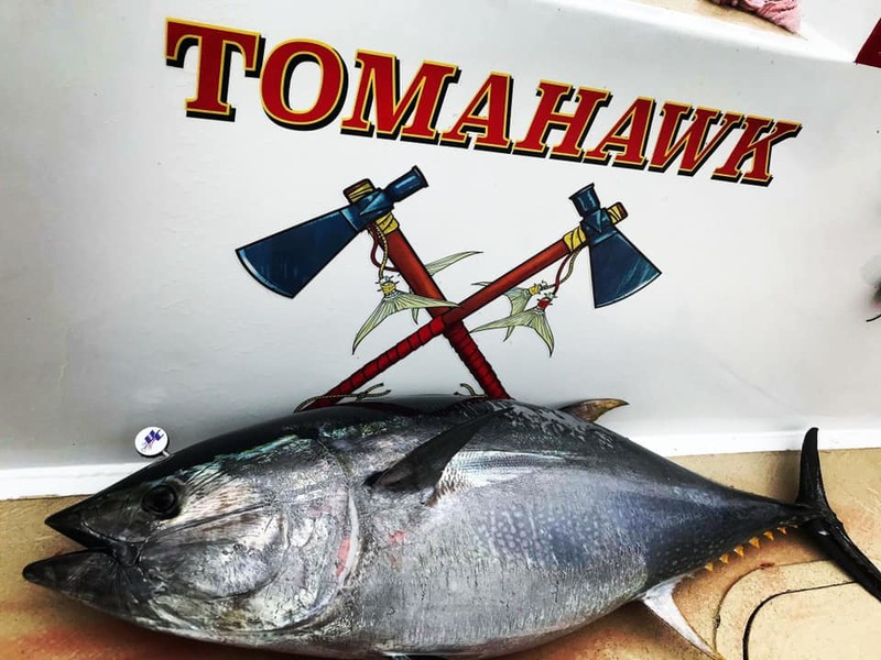 Image result for tomahawk bluefin