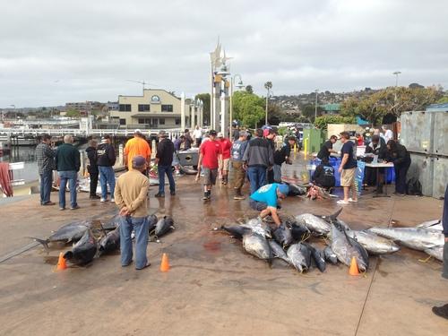 Fisherman 39 s landing excel returns for Fisherman s landing fish report
