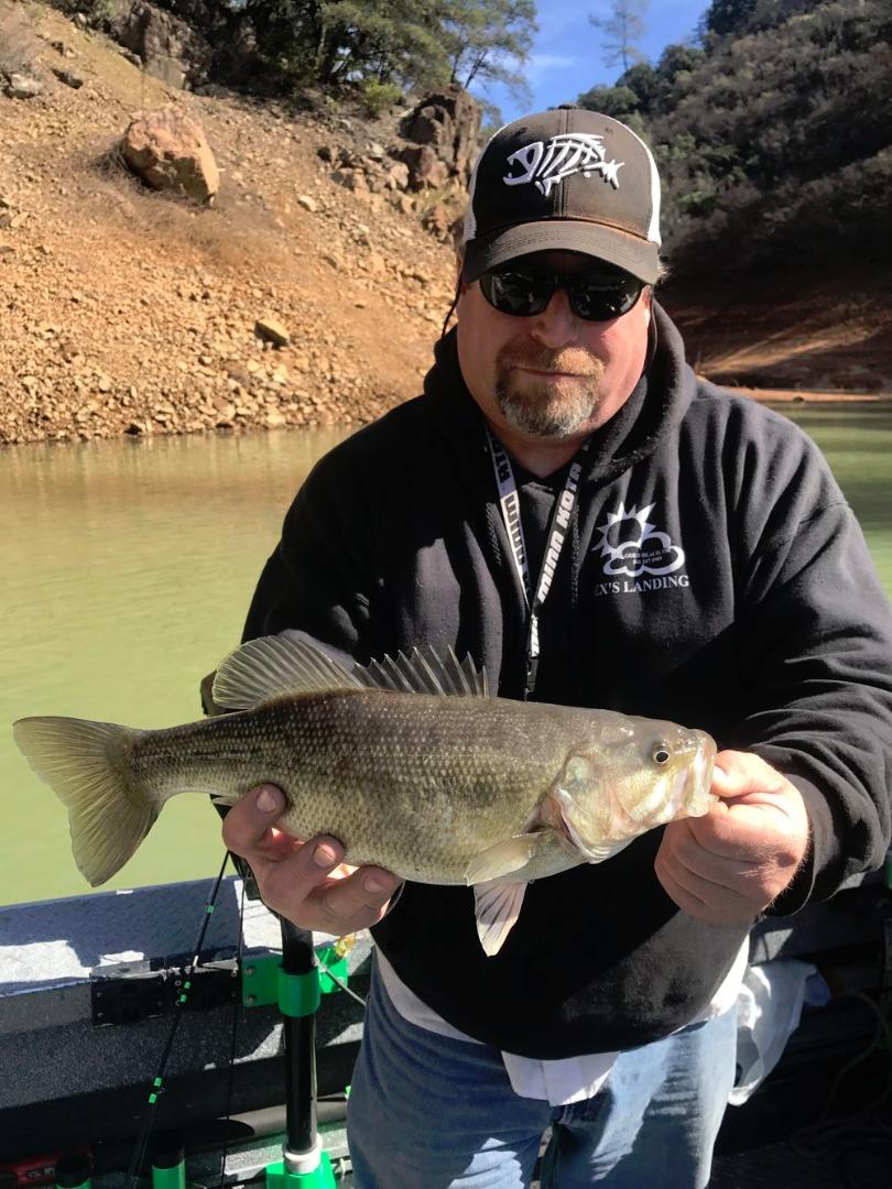 Shasta lake fish report shasta lake ca shasta county for Fisherman s landing fish report