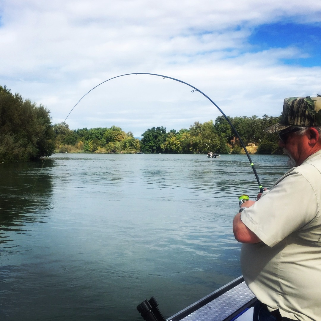 Sacramento river fish report ca for Kings river fishing