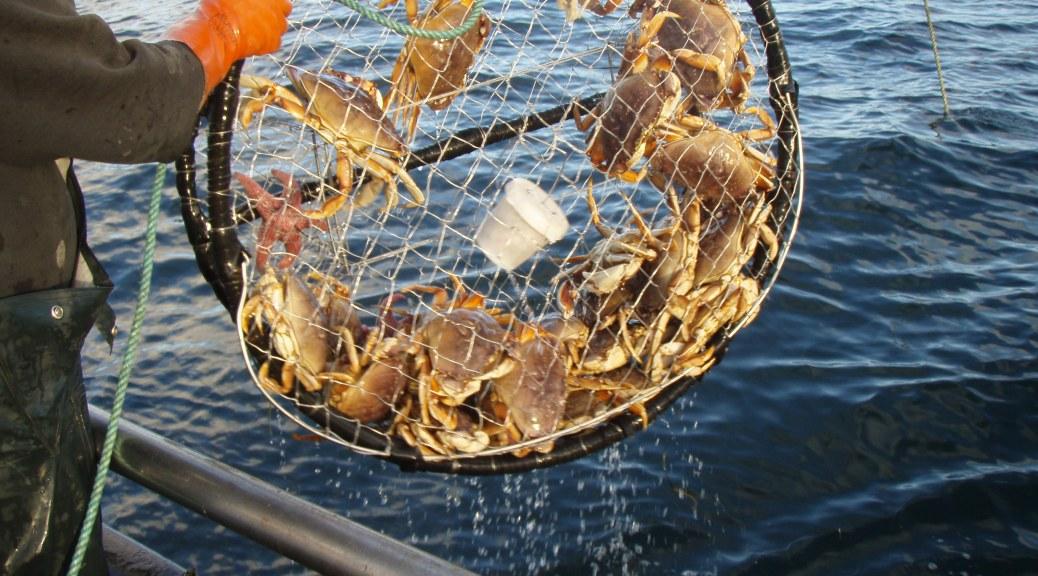Humboldt county coast fish report eureka ca humboldt for California fish planting