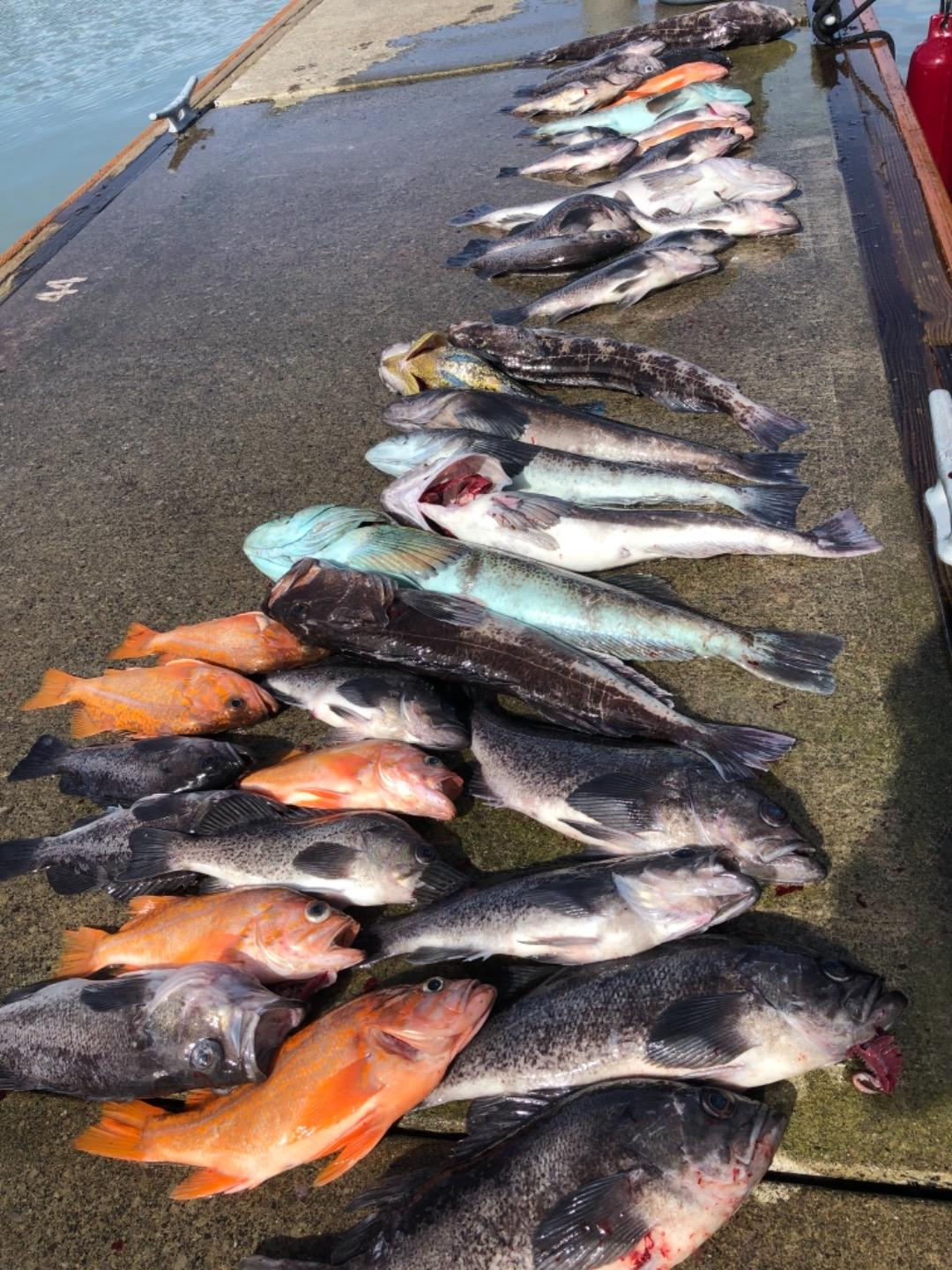 Lingcod fishing takes off