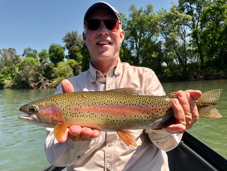 Sacramento River - Lower Fish Report - Redding, CA (Shasta County)