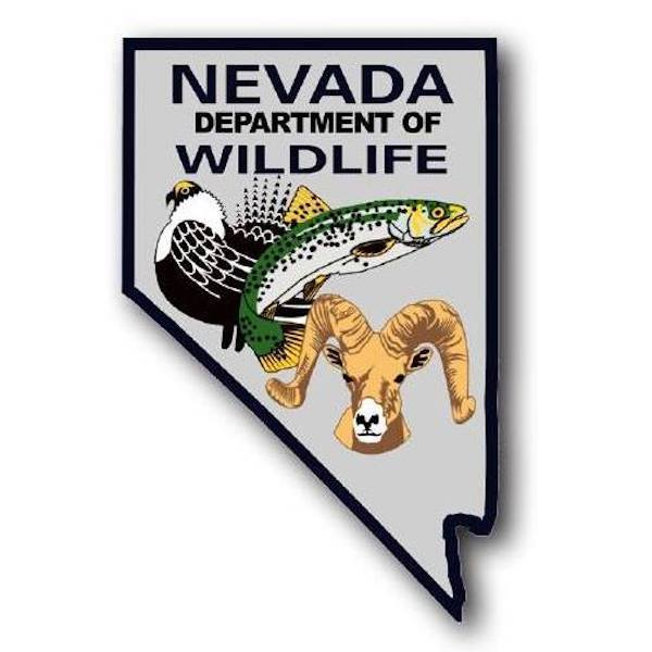 Fish Report - Eastern Nevada Fishing Report