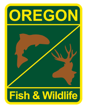 Illinois River Fish Report - Cave Junction, OR