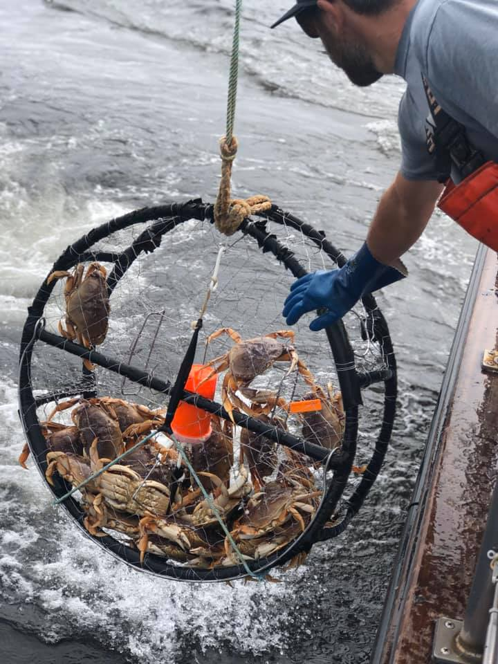 Bass Tub Crab & Rockfish LImits