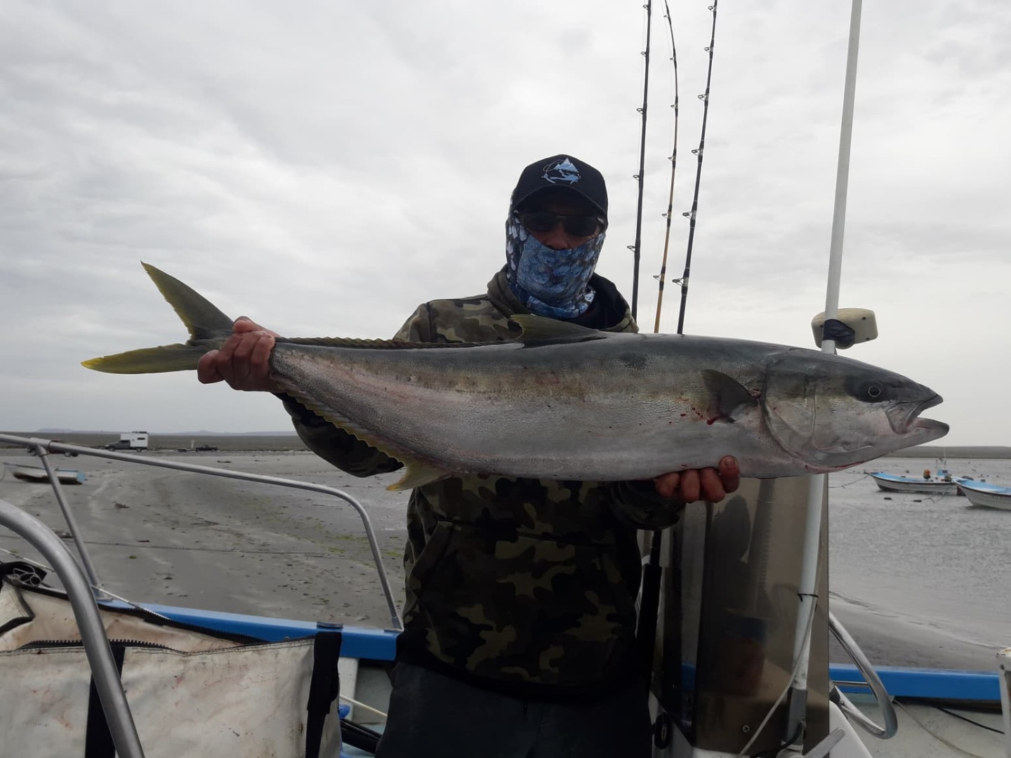 Nice Size Yellowtail Last Weekend