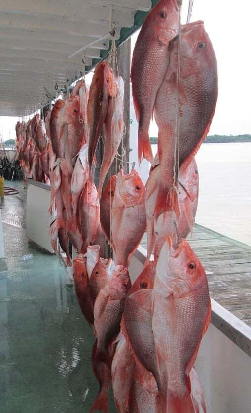 First Day of Red Snapper Season