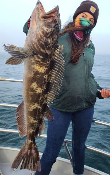 Lingcod on The Bite This Morning