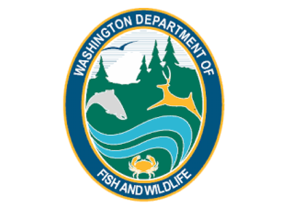 WDFW to host live 'Waterbirds of Washington' event